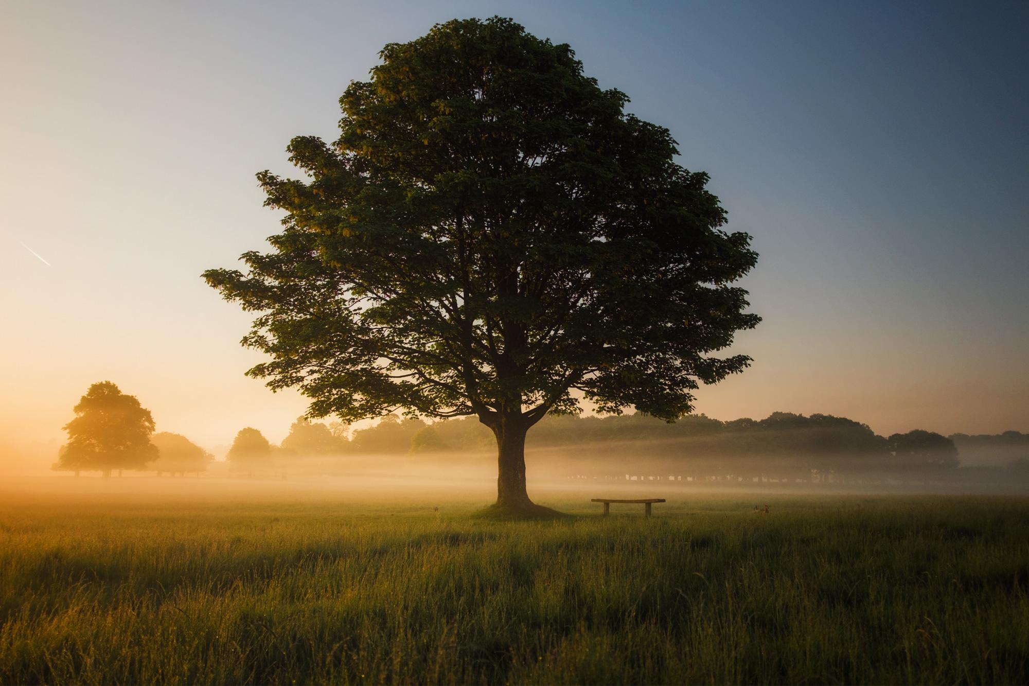 mindfulnessconcorazon